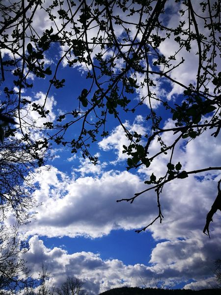 Low Angle View Sky Nature Tree Blue Beauty In Nature No People Cloud - Sky Branch Tranquility Outdoors Growth Day Beauty In Nature Fun Scenics Backgrounds Close-up Treetop