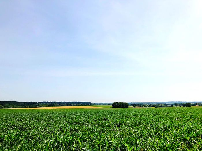 Sky Field Plant Agriculture Growth Landscape Land Environment Beauty In Nature Scenics - Nature Tranquil Scene Tranquility Green Color Cloud - Sky Rural Scene Idyllic Farm Nature
