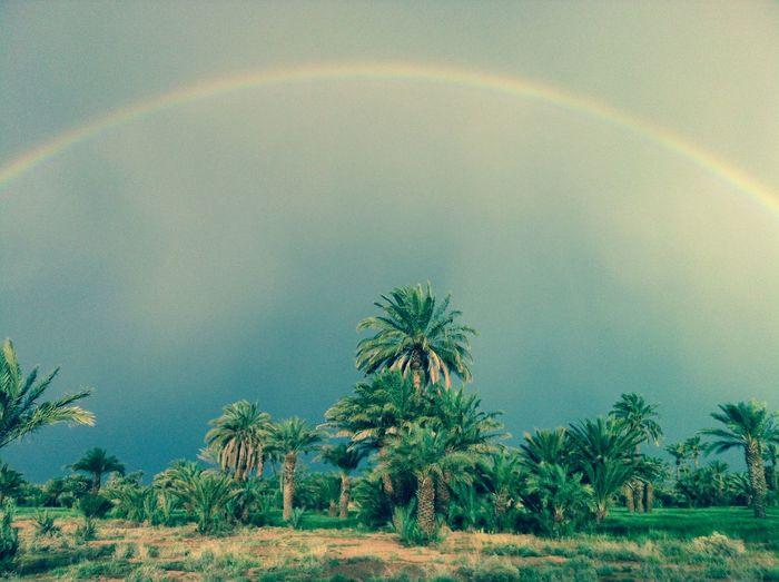 Rainbow Regenbogen Palm Trees Summer