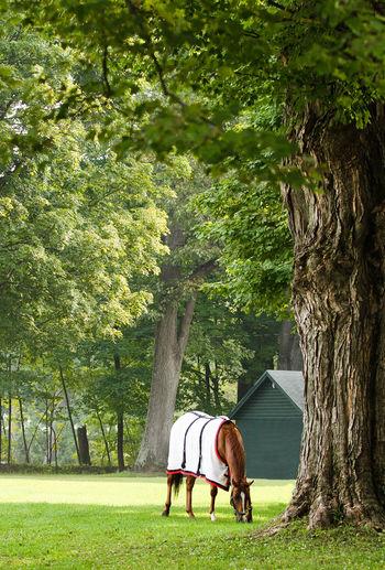 Saratoga race course, backstretch - morning workouts. Horse Horse Photography  Horse Racing Horses Morning Rituals Saratoga Race Course Thoroughbredhorse Thoroughbredracing Thoroughbreds