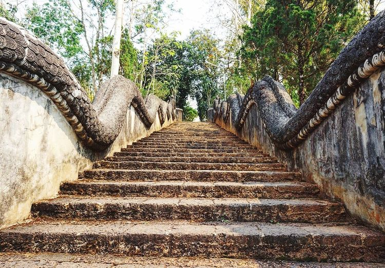 Direction Tree Plant Diminishing Perspective No People Day Footpath Architecture Staircase Nature