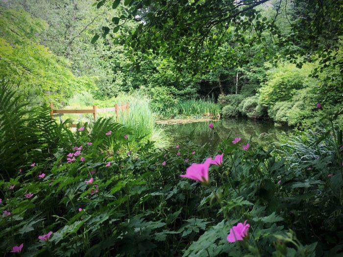 Geheimnisvoll... Daswasichsehe😊 Tadaa Community EyeEm Nature Lover EyeEm Deutschland Landscape Waldspaziergang