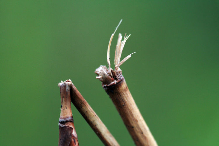 Close-Up Of Dried Plant Stems