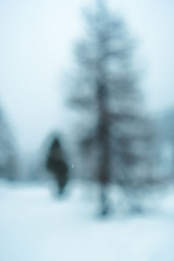 Blurry pine tree Walking Hike Outdoors Forest Snow Cold Temperature Nature Winter One Person Day Defocused Real People Unrecognizable Person Mammal Leisure Activity Land Lifestyles Blurred Motion Tree Men Snowing