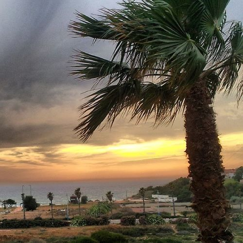 Sunset Beutiful  Israel H̱adera Givat olga Romantic Palm trees Love Air Wind Sun Sea Water Orange Keep  calm Weekend