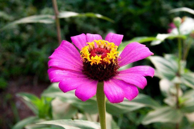 Flower Flower Porn Nature Senhora Do Carmo