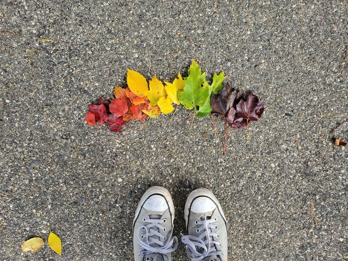 Low section of person standing on yellow leaves