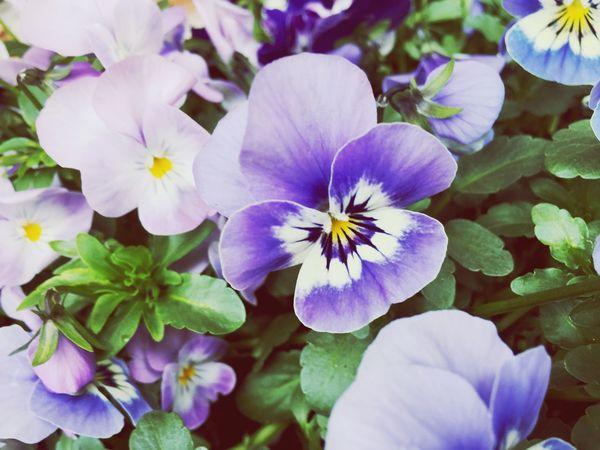 Flower Beauty In Nature Flower Head 🌺 The Great Outdoors - 2018 EyeEm Awards