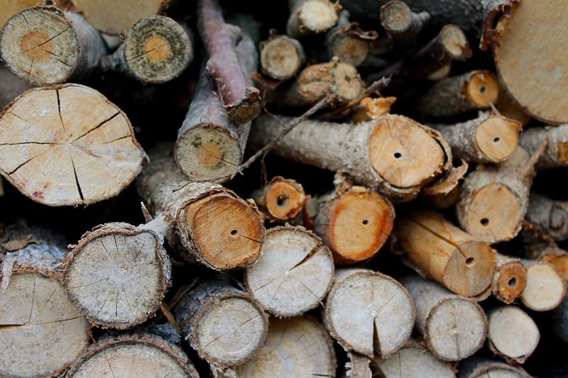 Wood Pile Of Wood Wood Pile Beautiful Nature In My Garden Nature On Your Doorstep Nature Photography