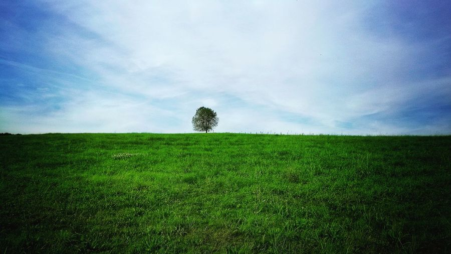 Tranquil Scene Sky Tree Tranquility Green Color Landscape Scenics Field Nature Single Tree Beauty In Nature Grassy Growth Cloud - Sky Cloud Blue Day Non-urban Scene Green No People