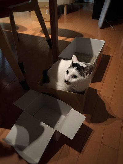 There is my cat in the middle size box. I think it is too small to stay for her. Cat Box