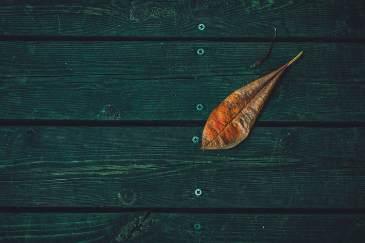 High angle view of leaf on wooden table