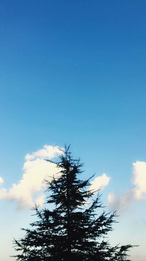 EyeEm Best Shots Tree Sky Blue Cloud Silhouette Nature Beauty In Nature High Section Outdoors