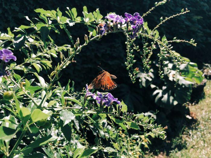 Butterfly on purple flowering plant