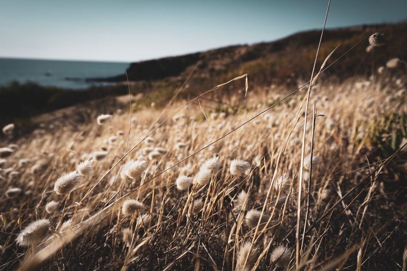 All i want to do today is resting on a field of dandelions Dandelion Land Focus On Foreground Plant Growth Nature Tranquility Beauty In Nature Sky Day Field Tranquil Scene No People Close-up Scenics - Nature Grass Landscape Outdoors Sea