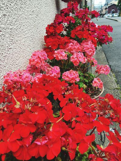 Flowers 暑い