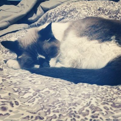 E não é q ela dormiu no lugar do meu pai?? HAUHAUHAUHA Cat Sleep