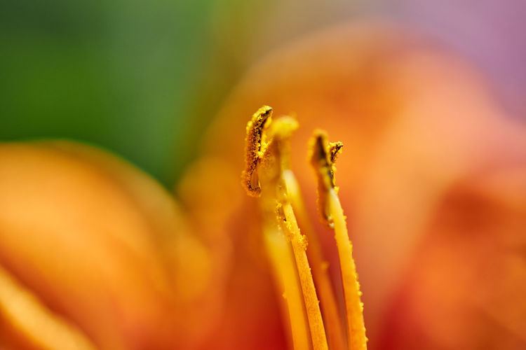 Close-up of dew on flower
