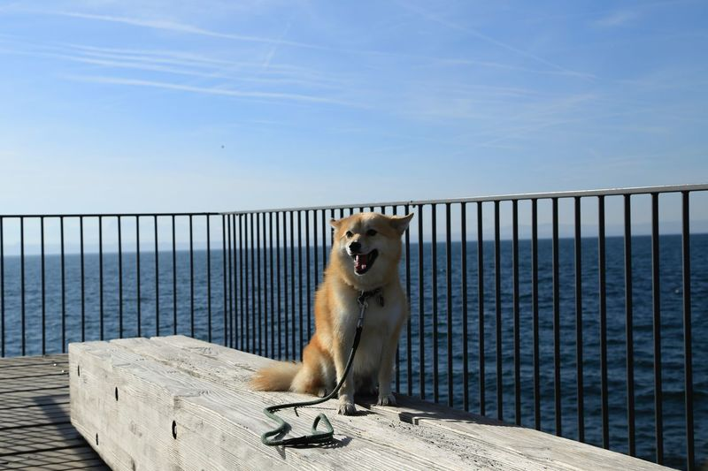 Dog sitting on pier against sky
