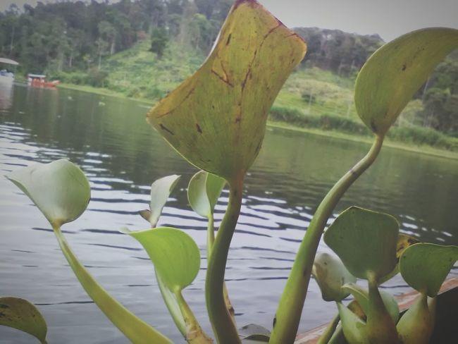Vegetation Laguna Planta De Mar Villa Rica Peru