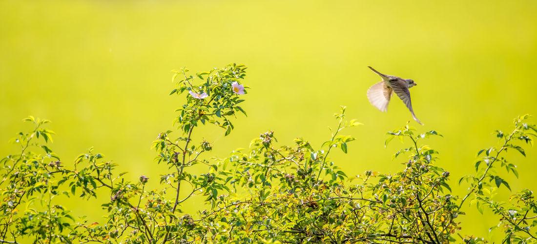 A bird flies