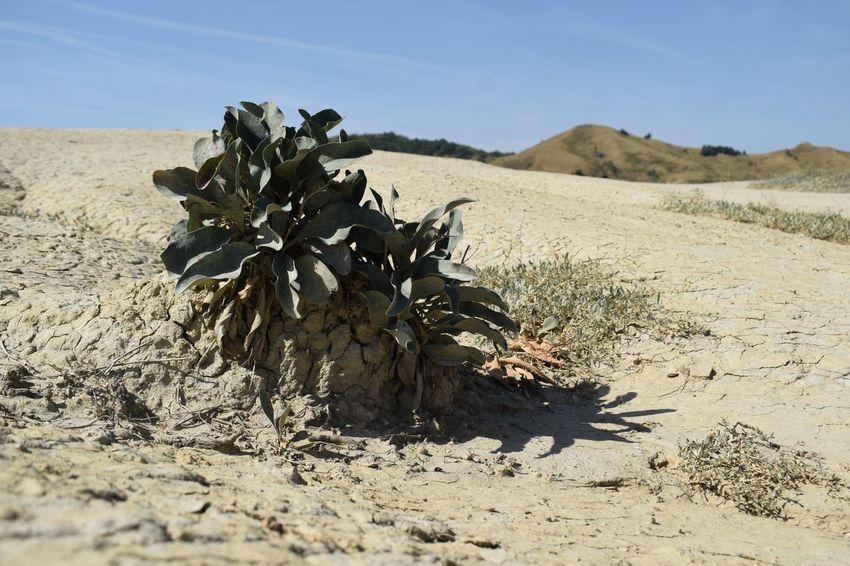 Plant Sunlight Volcanoes EyeEmNewHere Sand Nature Arid Climate Desert Sand Dune Day No People
