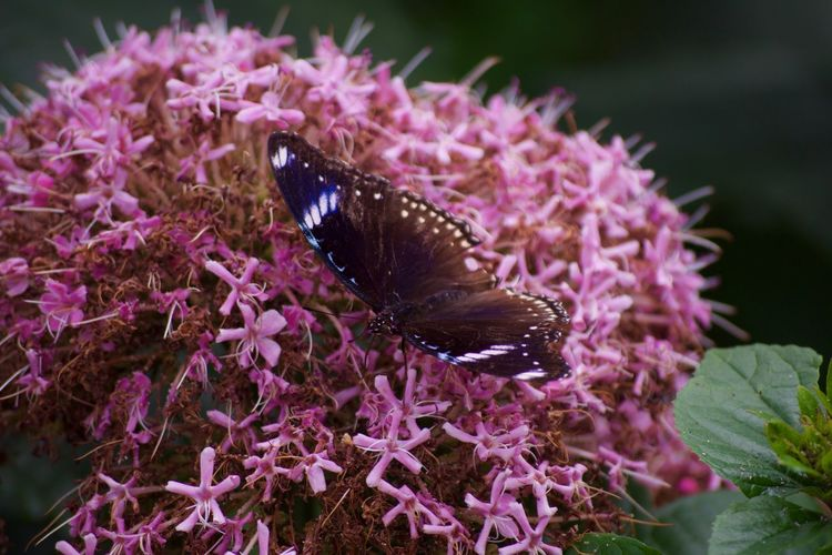 Animal Themes Animal Wildlife Animals In The Wild Beauty In Nature Blooming Close-up Day Eastern Purple Coneflower Flower Flower Head Fragility Freshness Growth Insect Nature No People One Animal Outdoors Petal Plant Pollination Purple Symbiotic Relationship Thistle