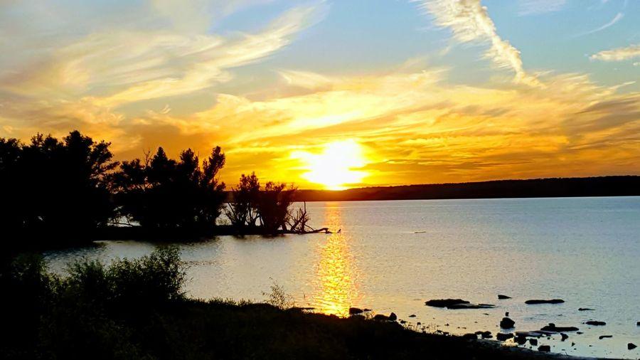 Grove sunset