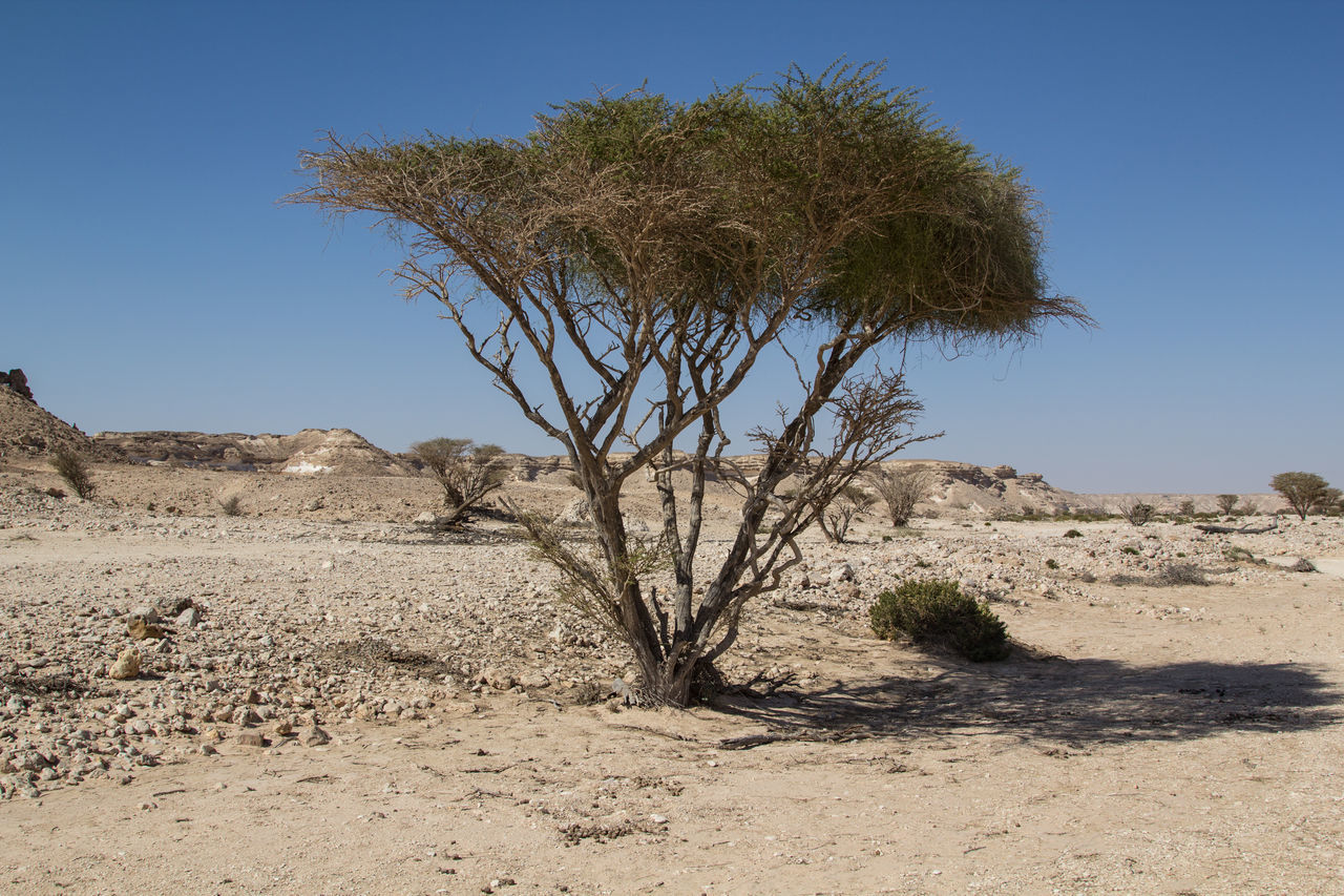tree, landscape, nature, arid climate, clear sky, tranquil scene, day, tranquility, non-urban scene, solitude, outdoors, scenics, beauty in nature, no people, lone, desert, plant, tree trunk, sky