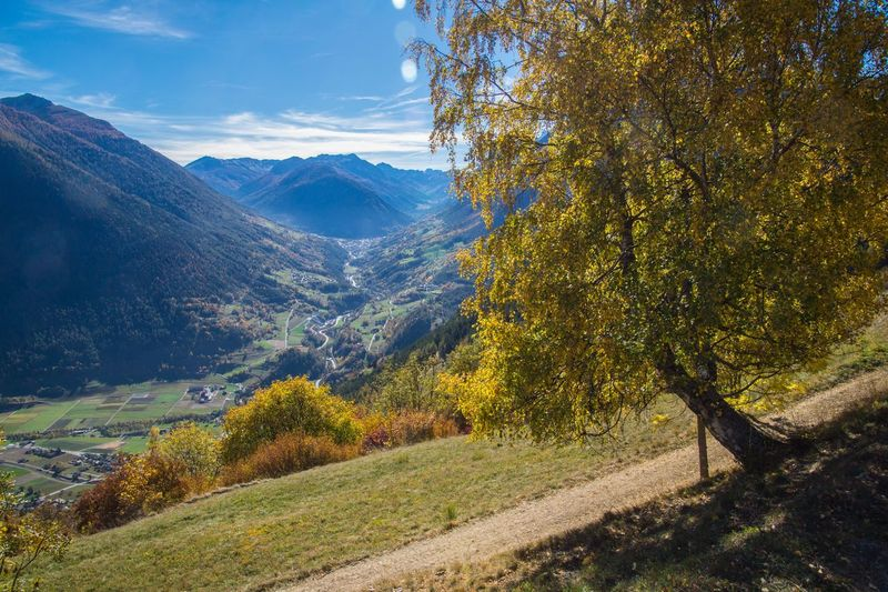levron,valais,swiss Tree Plant Beauty In Nature Scenics - Nature Tranquility Tranquil Scene Mountain Landscape Autumn Environment Nature Land Sky Non-urban Scene Day Growth No People Change Mountain Range Idyllic Outdoors Autumn Collection