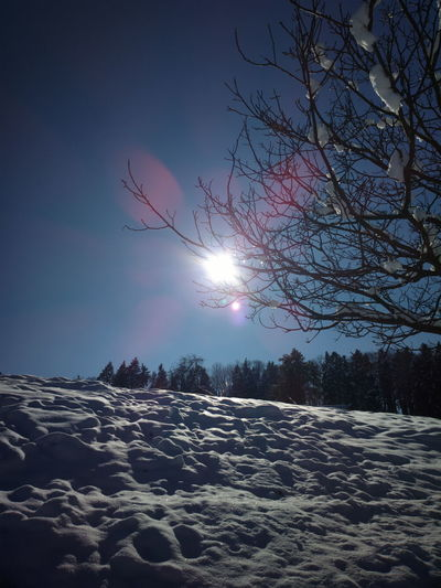 Cold Cold Temperature Frozen It's Cold Outside Landscape Nature Snow Snow Covered Snowcapped Sun Sunbeam Sunshine Trees White Winter Photography In Motion The Great Outdoors With Adobe