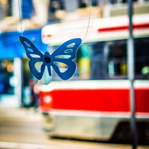 TSOQ's Butterfly Toronto Queen Street West Butterfly Urban