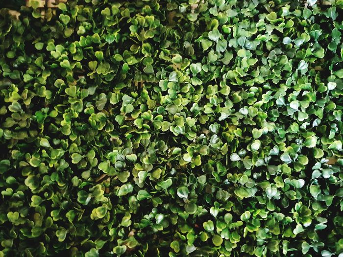 Leaf Full Frame Backgrounds Plant Close-up Green Color Botanical Greenery Garden Spring Scene Pure