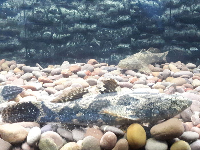 Pebble Beach UnderSea Water Sea Beach Underwater Sea Life Pebble Close-up Animal Themes Seaweed Seashell Rushing Water Plant Koi Carp Coral Clear Calm Stone - Object Algae Shore Oyster  Shell Surf Wave Animal Shell Lily Pad Water Lily