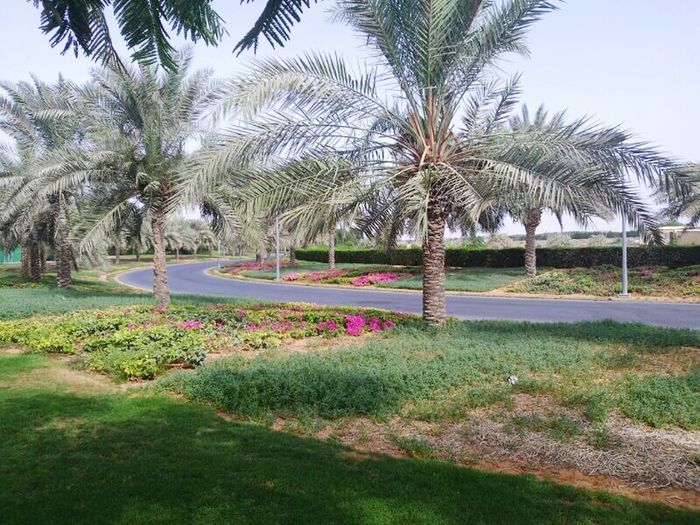 Paintball Park Sharjah Uae Beauty In Nature Beautiful ♥ Peaceful Relaxing