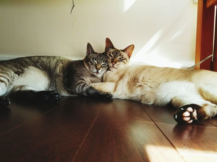 Friends without benefits or genitalia Catsofinstagram Cat Pets Relaxation At Home