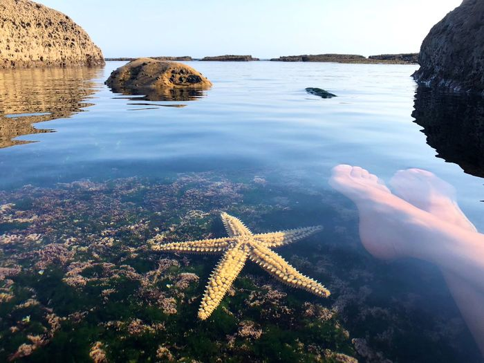 Yellow starfish lying under the water on the rock near the human foots in front of the ocean coast Horizon Over Water Horizon Blue Sky Yellow Rocks And Water Rocky Beach Rocky Coastline Water Sea Nature Beauty In Nature Day Reflection Tranquility Scenics - Nature Tranquil Scene No People Starfish  Marine Beach Sky Outdoors Waterfront