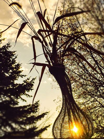 Sun-Dried Silouette Sunset EyeEm Nature Lover StreamzooVille Autumn Wildflowers Shades Of Winter