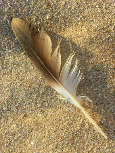 Sand Details Of Nature Close-up Day Feather  Fragility High Angle View Nature No People Outdoors Still Life