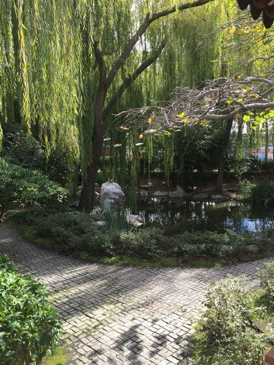 Darling Harbour Chinesegardens Chinesegarden Water Nature Garden Of Frienship Trees