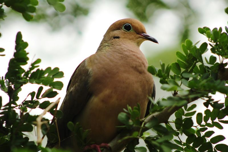 Just a pigeon EyeEm Selects Vertebrate Bird Animal Themes Animal Wildlife Plant Animal Animals In The Wild One Animal Perching Nature Green Color Tree Growth No People Day Close-up Outdoors Plant Part Leaf My Best Photo