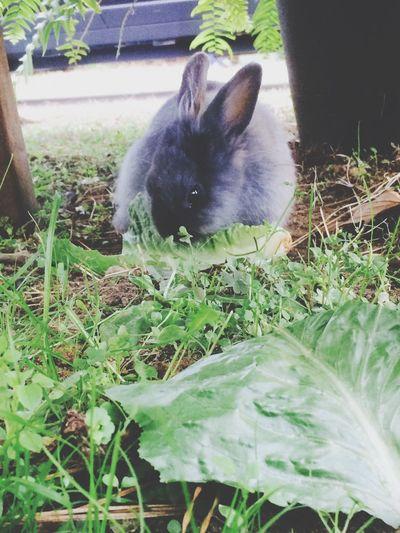 Newfriends Bunnys Cute