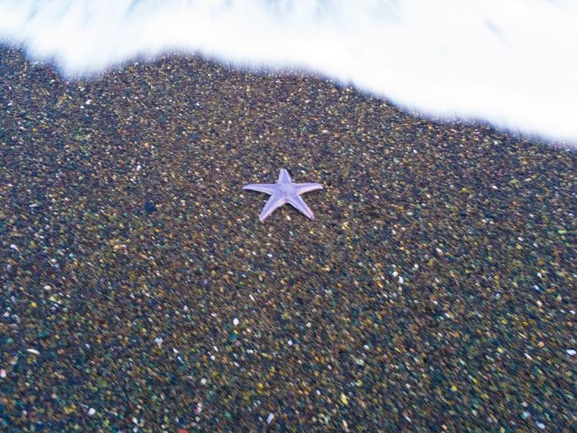 海がきた。お迎えがきた。帰るときがきた。 Star Shape Starfish  No People Sea Life Dusk Asteroidea Fivefingers Sandstar Seastar Starfish At Beach Walking Around EyeEmBestPics From My Point Of View Landscapes EyeEm Best Shots Moments Tranquil Scene Outdoors Tranquility Scenics Water Beauty In Nature Beach Sea EyeEmNewHere