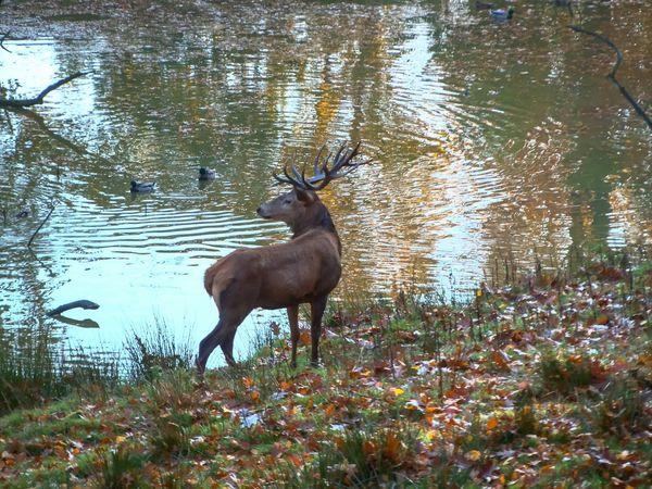Nature_collection EyeEm Best Shots - Landscape Colors Of Autumn Hdr_Collection