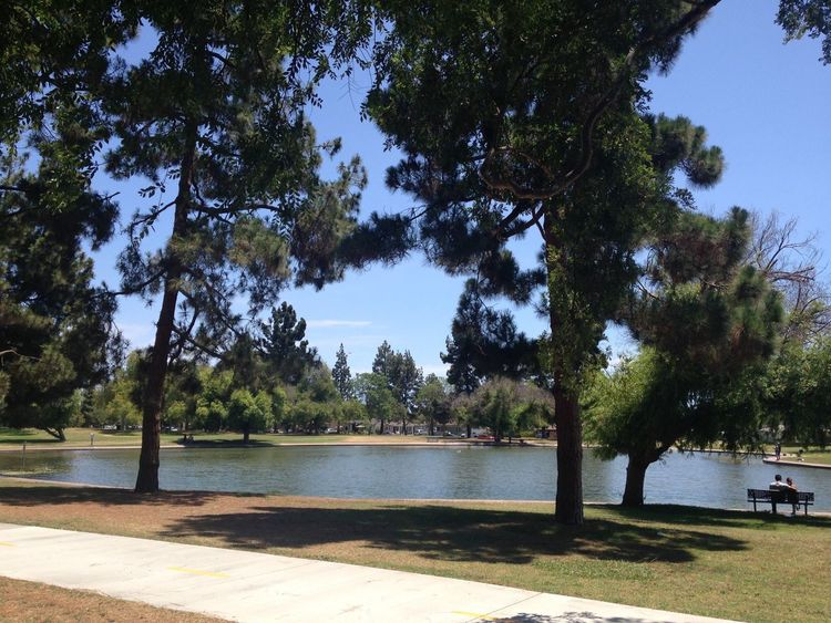 Heartwell Park Tree Trees Lake Lake View Park Parks Long Beach Long Beach California California Outdoors Outdoor Photography SoCal Los Angeles, California Nature Nature Photography Nature Lover Outside People People Watching Water Walkway Sunshine Lakewood Couple Couples