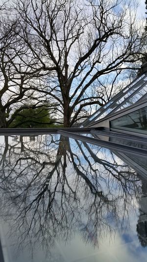 Botanical Garden Botanical Gardens Bare Tree Basel, Switzerland Quiet Places Reflection Tree Outdoors Day Tranquility Nature Sky Beauty In Nature No People Branch Bare Tree