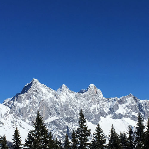 Dachstein Glacier On A Perfect Winter Day Dachstein Adventure Beauty In Nature Blue Clear Sky Cold Temperature Copy Space Day Forest High Landscape Low Angle View Mountain Mountain Range Nature No People Outdoors Peak Scenics Sky Snow Tranquil Scene Tranquility Tree Winter Go Higher