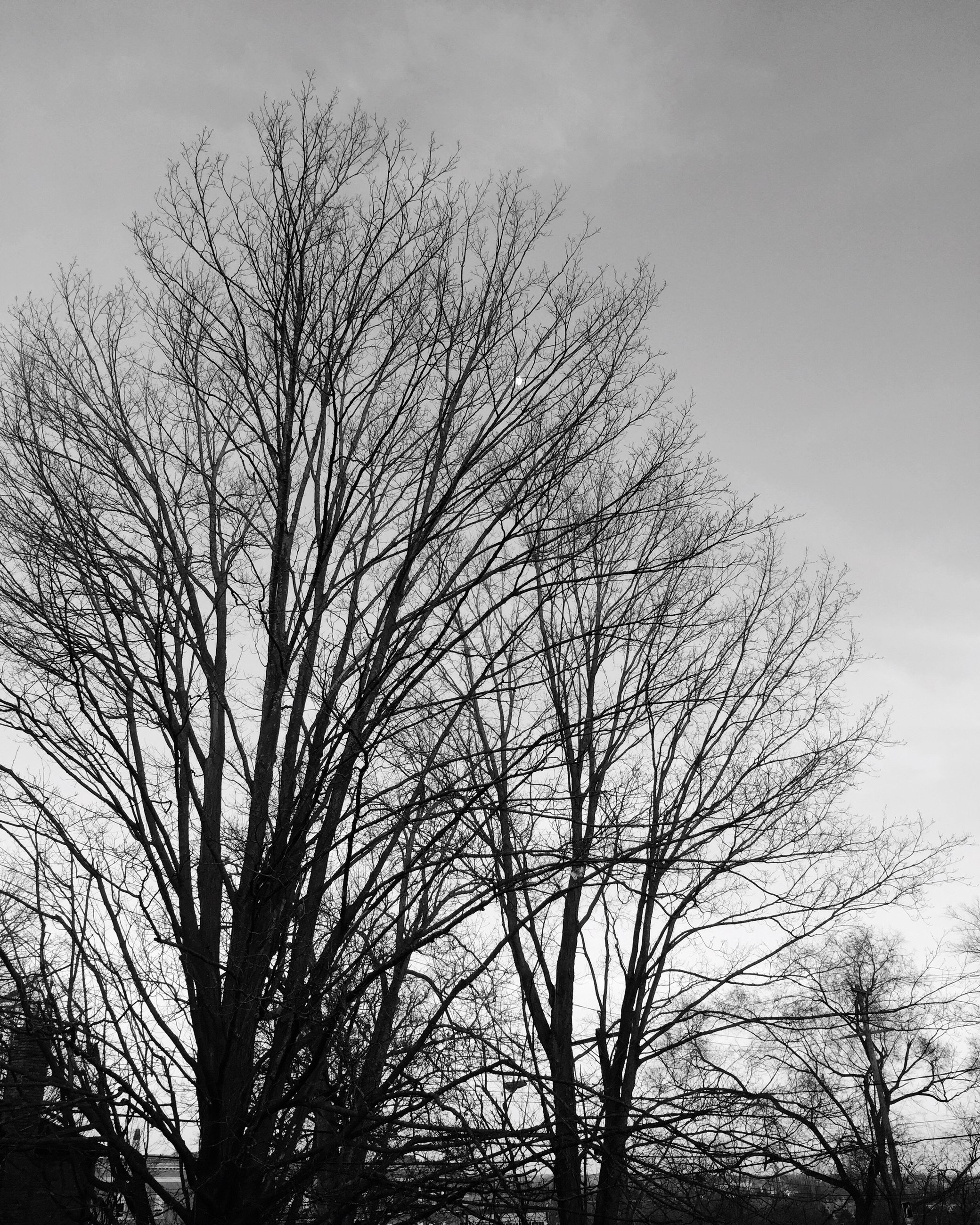 bare tree, tree, low angle view, branch, silhouette, sky, tranquility, nature, beauty in nature, scenics, growth, outdoors, tranquil scene, no people, tree trunk, dusk, day, cloud - sky, clear sky, high section