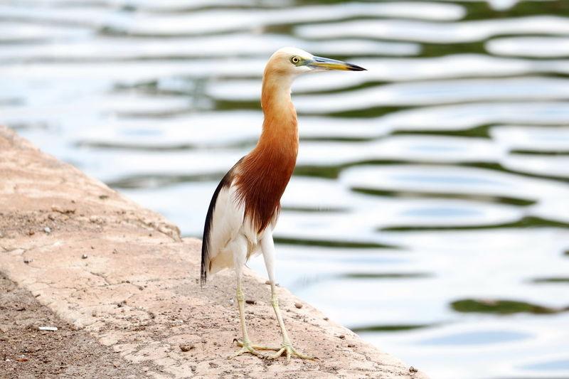 Close-up of bird perching on land by lake
