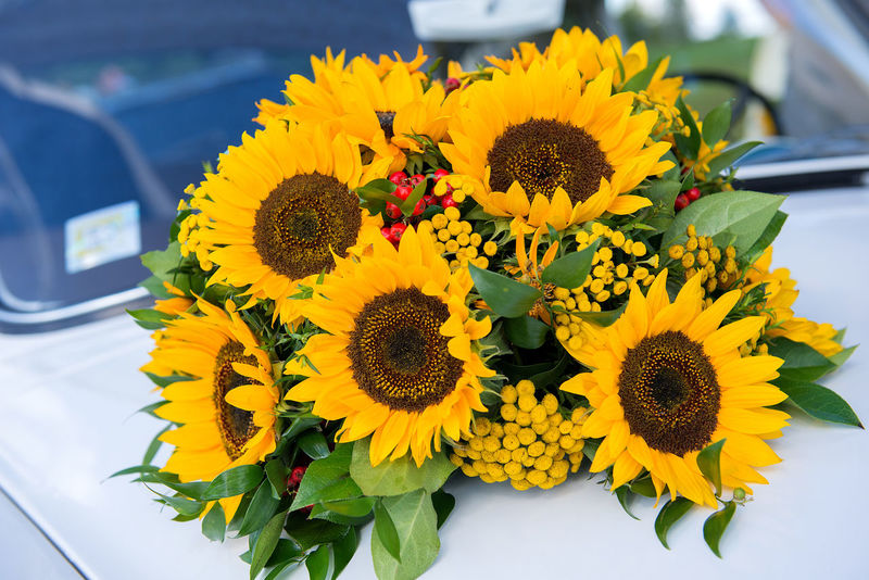 wedding car decor with yellow sunflowers Beauty In Nature Car Decor Close-up Decor EyeEmNewHere Flower Flower Head Fragility Freshness Petal Sunflower Sunflowers Wedding Wedding Background Wedding Day Wedding Decor Wedding Decoration Wedding Details Yellow